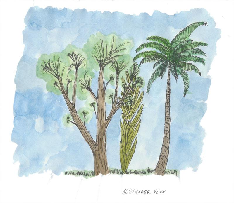 Palmen und Pflanzen mit Aquarellfarben kolloriert (Schmincke)
