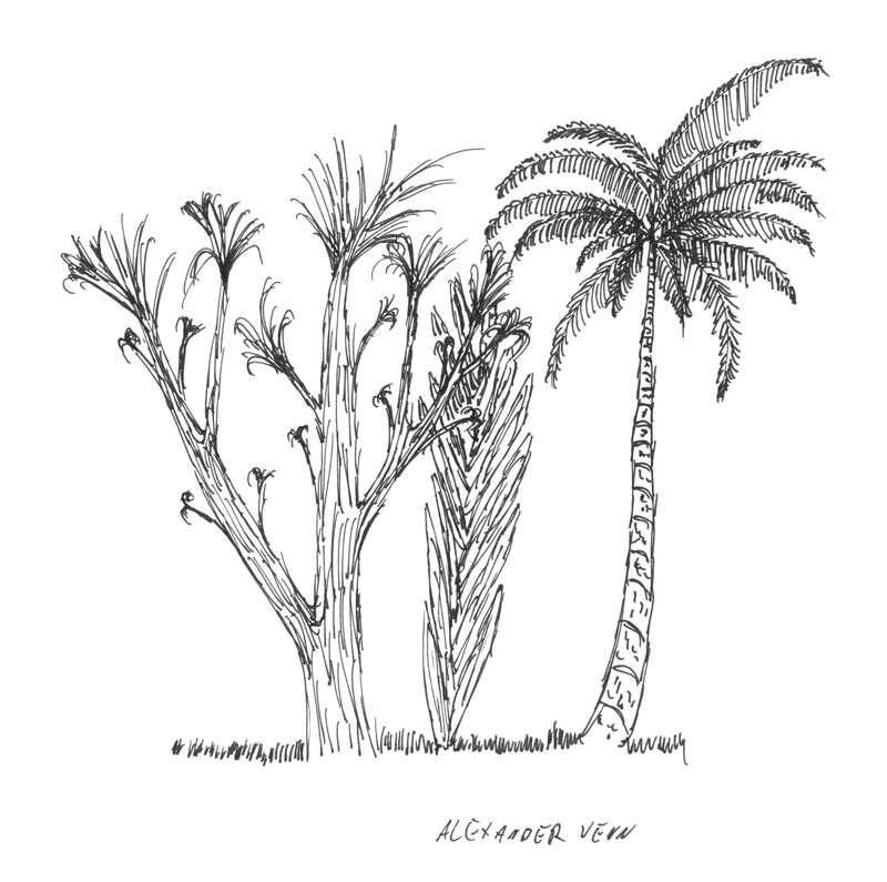 Palmen und Pflanzen schwarz-weiss zeichnung zum kolorieren mit Aquarellfarben